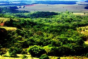 Vista área da nascente principal do Rio Araguaia, essa imagem foi captada em 5 de junho de 2010. E comprova que toda a nascente está recuperada e viva. Foto: João Faria/ONG Rios Goianos.