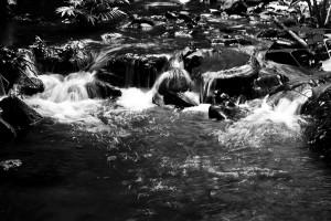 Córrego desconhecido no município de Uruana - Goiás, este local ainda luta bravamente para sobreviver em meio a imensas lavouras de Melancia e criação de gado. Foto: João Faria/ONG Rios Goianos. 2014