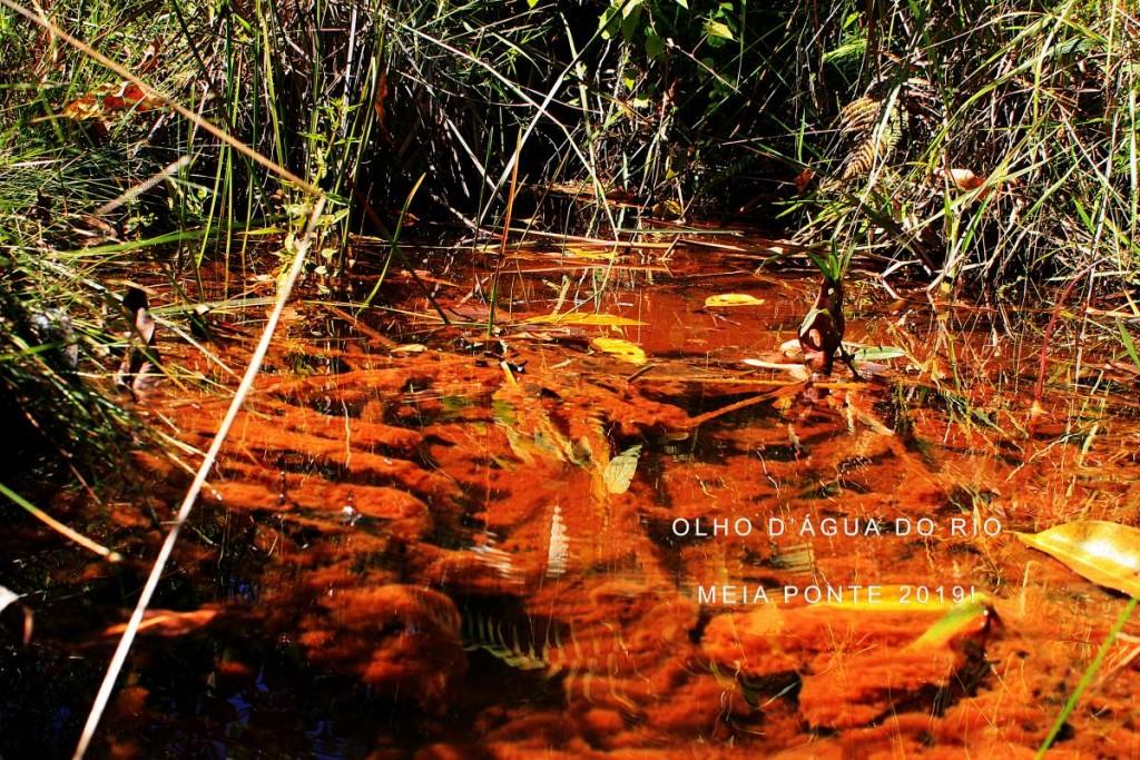 O atributo alt desta imagem está vazio. O nome do arquivo é Olho-da-nascente-do-Rio-Meia-Ponte-Fazenda-Sao-Geraldo-Itauçu-Goias-21-Foto-Joao-Faria-ONG-Rios-Goianos-Recuperado-1024x683.jpg